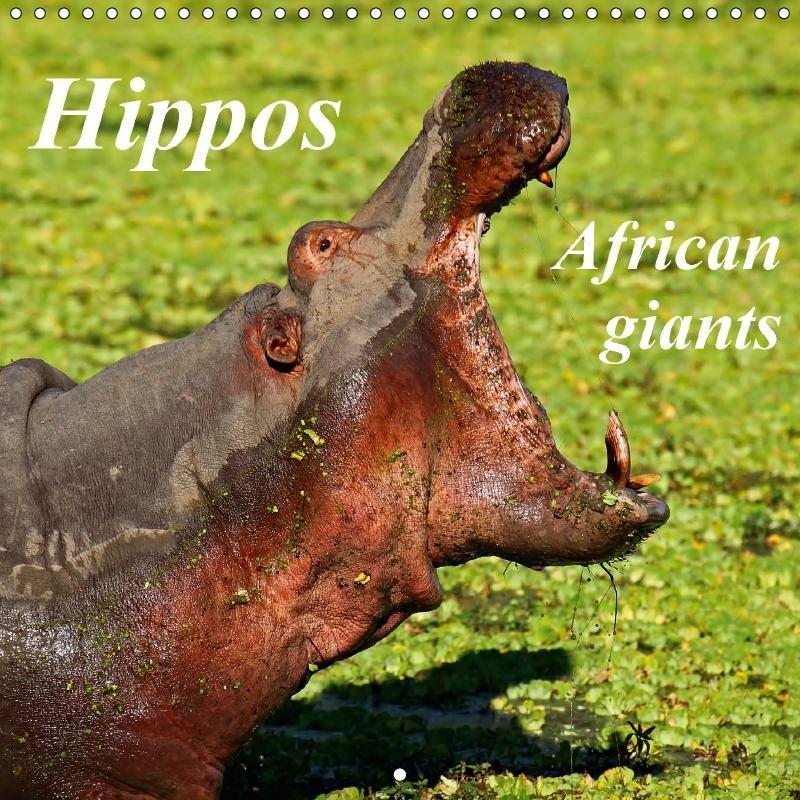 Hippos - African giants (Wall Calendar 2017 300...