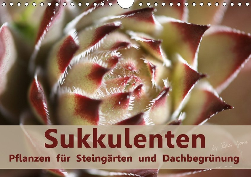 Sukkulenten - Pflanzen für Steingärten und Dach...