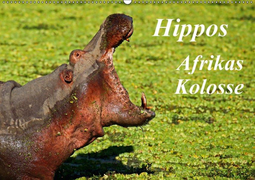 Hippos - Afrikas Kolosse (Wandkalender 2017 DIN...