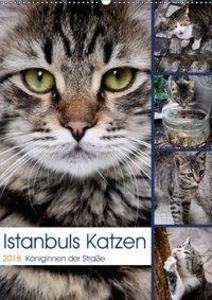 Istanbuls Katzen (Wandkalender 2018 DIN A2 hoch)