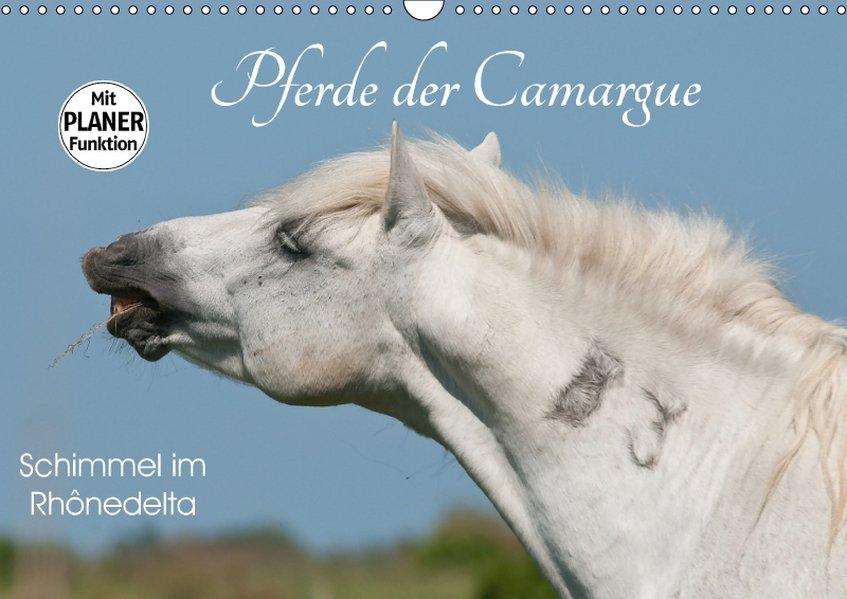 Pferde der Camargue - Schimmel im Rhônedelta (W...