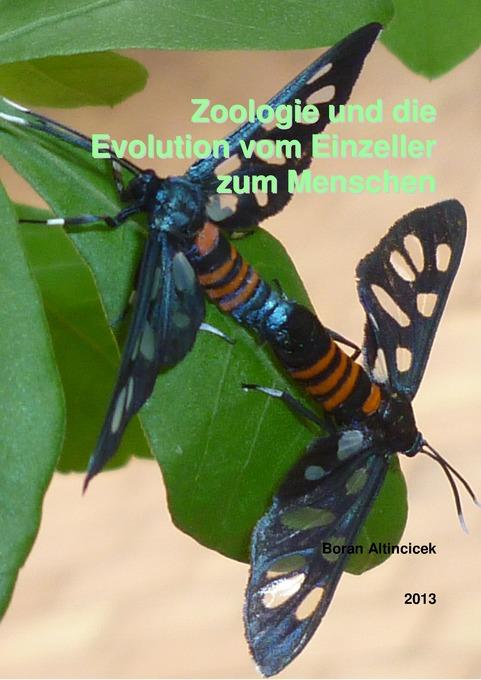 Zoologie und die Evolution vom Einzeller zum Me...
