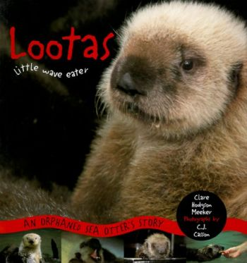 Lootas Little Wave Eater: An Orphaned Sea Otter's Story als Taschenbuch
