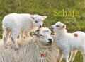 Schafe 2011