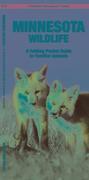 Minnesota Wildlife: A Folding Pocket Guide to Familiar Species