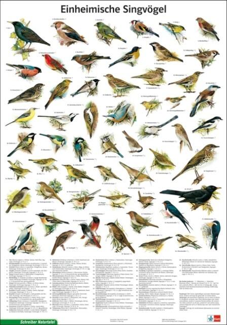 Einheimische Singvögel als Spielwaren