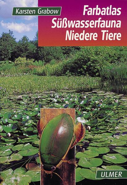 Farbatlas Süßwasserfauna. Wirbellose als Buch (gebunden)