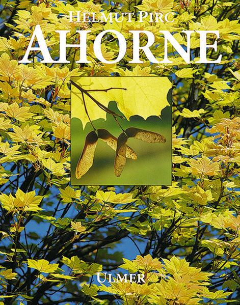 Ahorne als Buch