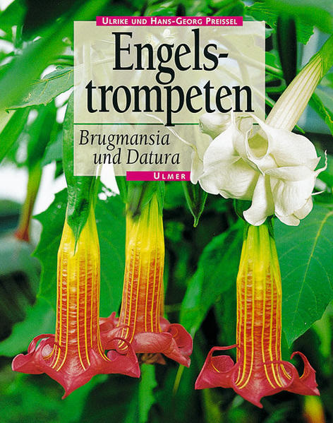 Engelstrompeten. Brugmansia und Datura als Buch