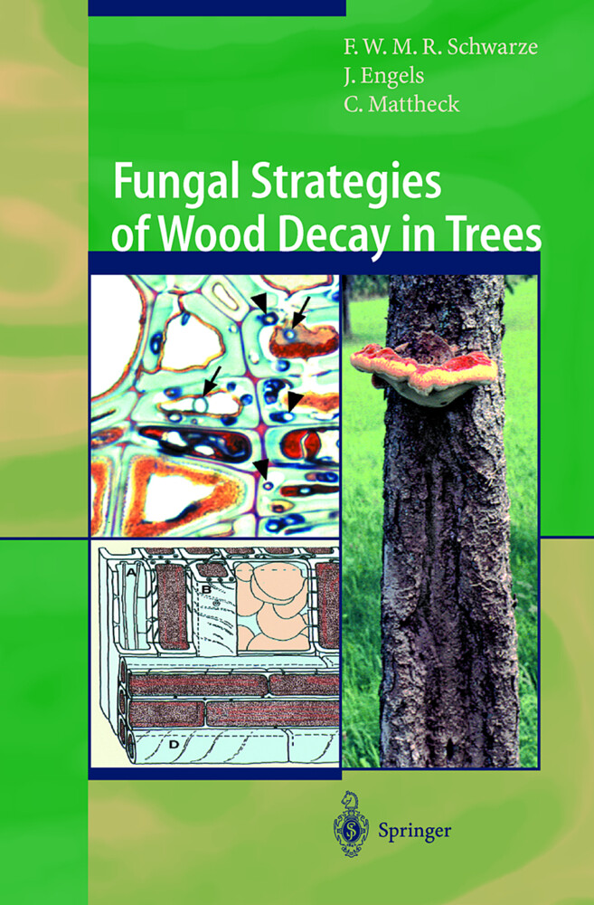 Fungal Strategies of Wood Decay in Trees als Buch