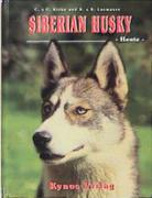 Siberian Husky - Heute