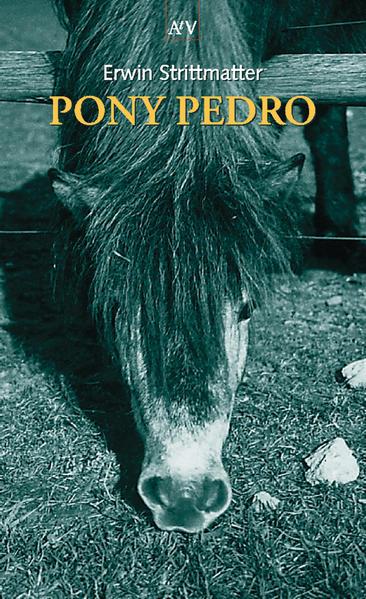 Pony Pedro als Taschenbuch von Erwin Strittmatter