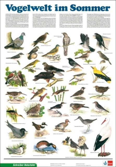 Vogelwelt im Sommer als Spielwaren