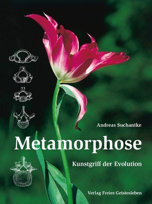 Metamorphose als Buch