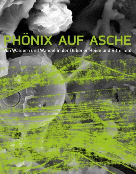 Phönix auf Asche als Buch von Hans Bleymüller, ...