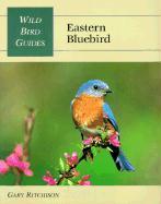 Eastern Bluebird als Taschenbuch