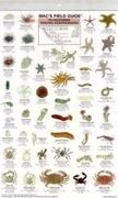 California Coastal Invertebrates