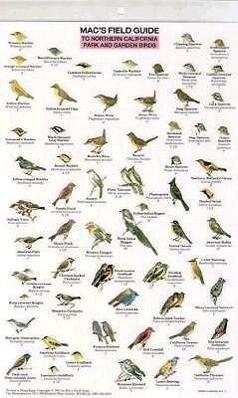 Northern California Park Backyard Birds als sonstige Artikel