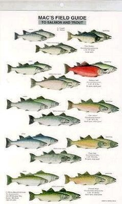 Mac's Field Guide to Trout and Salmon of North America als Taschenbuch