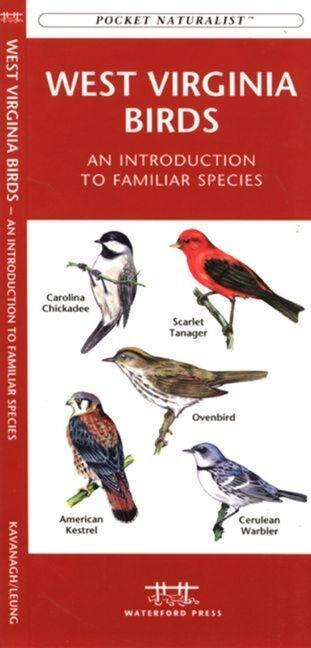 New Mexico Birds: A Folding Pocket Guide to Familiar Species als Taschenbuch
