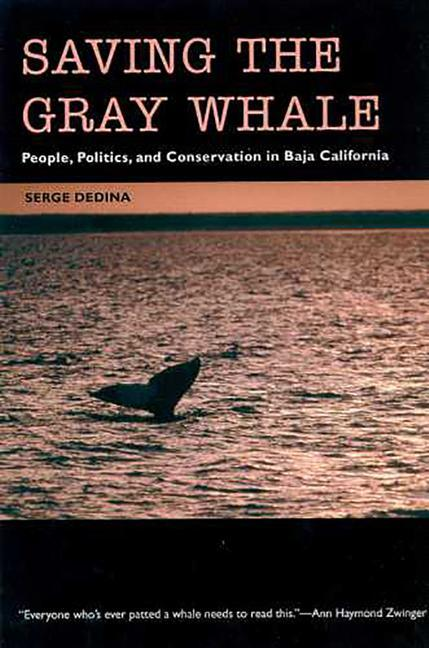 Saving the Gray Whale: People, Politics, and Conservation in Baja California als Taschenbuch