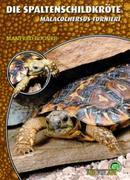 Die Spaltenschildkröte