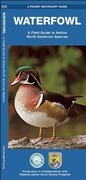 Waterfowl: A Field Guide to Native North American Species
