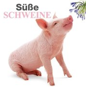 Süße Schweine