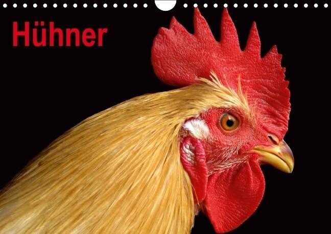 Hühner / Geburtstagskalender (Wandkalender immerwährend DIN A4 quer) als Kalender