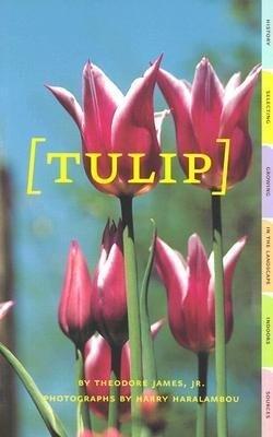 Tulip als Taschenbuch