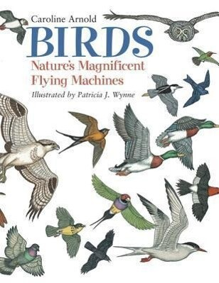 Birds: Nature's Magnificent Flying Machines als Taschenbuch