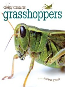 Grasshoppers als eBook Download von Valerie Bodden