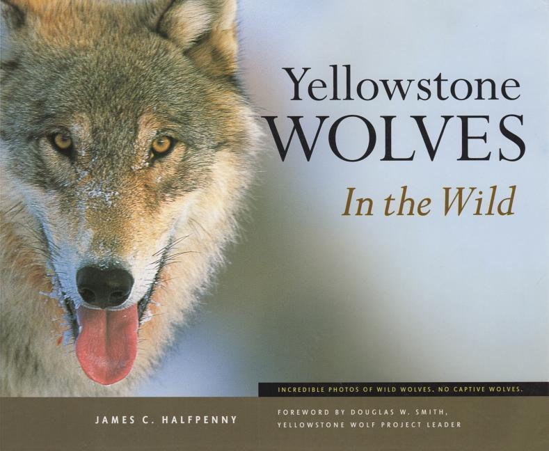 Yellowstone Wolves in the Wild als Taschenbuch