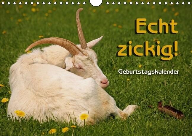 Echt zickig! / Geburtstagskalender (Wandkalender immerwährend DIN A4 quer) als Kalender