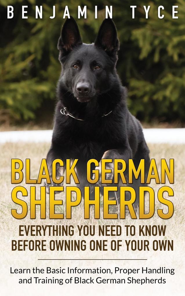 Black German Shepherds: Everything You Need To ...