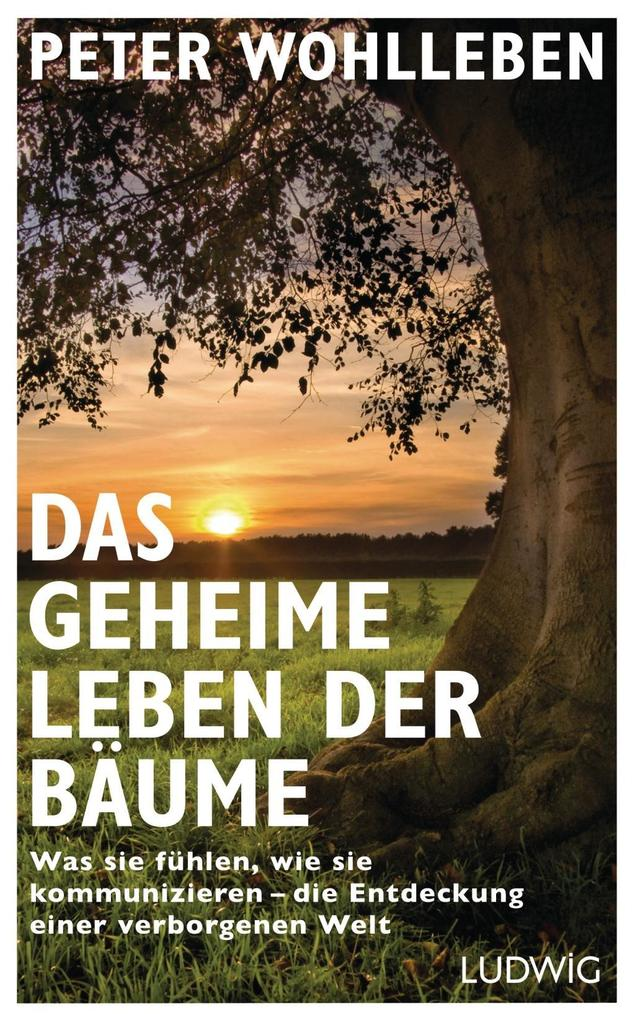 Das geheime Leben der Bäume als Buch