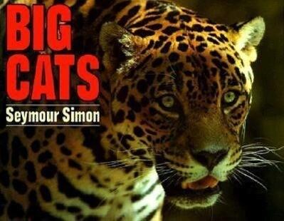 Big Cats als Taschenbuch