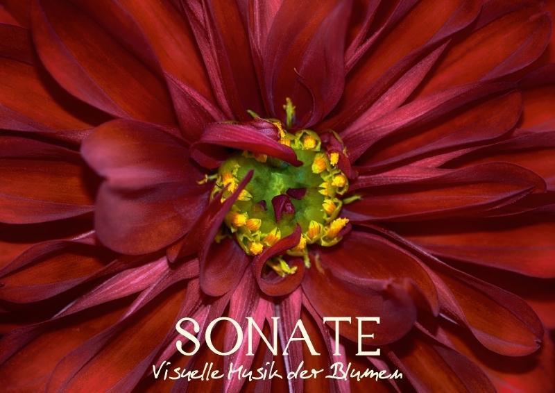 Sonate - Visuelle Musik der Blumen (Posterbuch ...