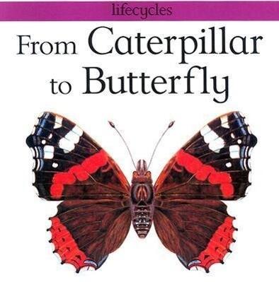 From Caterpillar to Butterfly als Taschenbuch