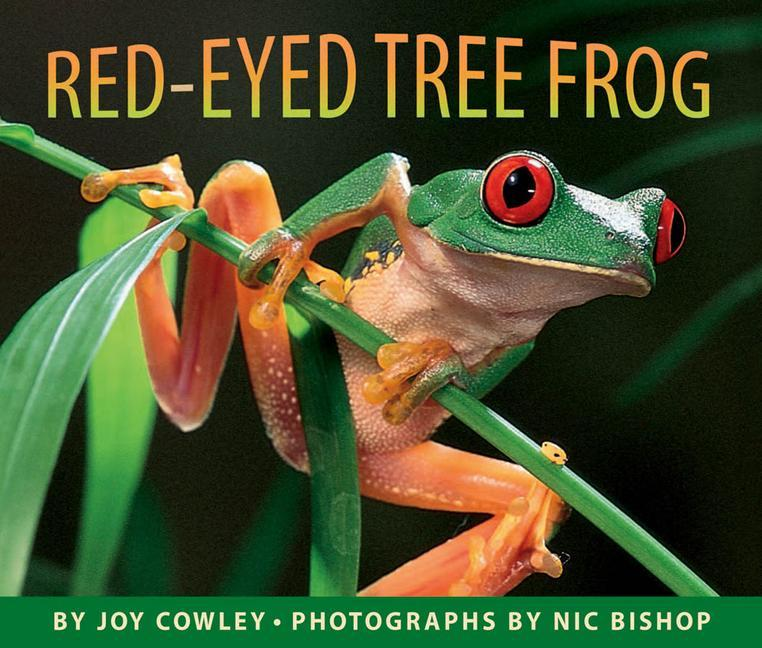 Red-Eyed Tree Frog als Buch