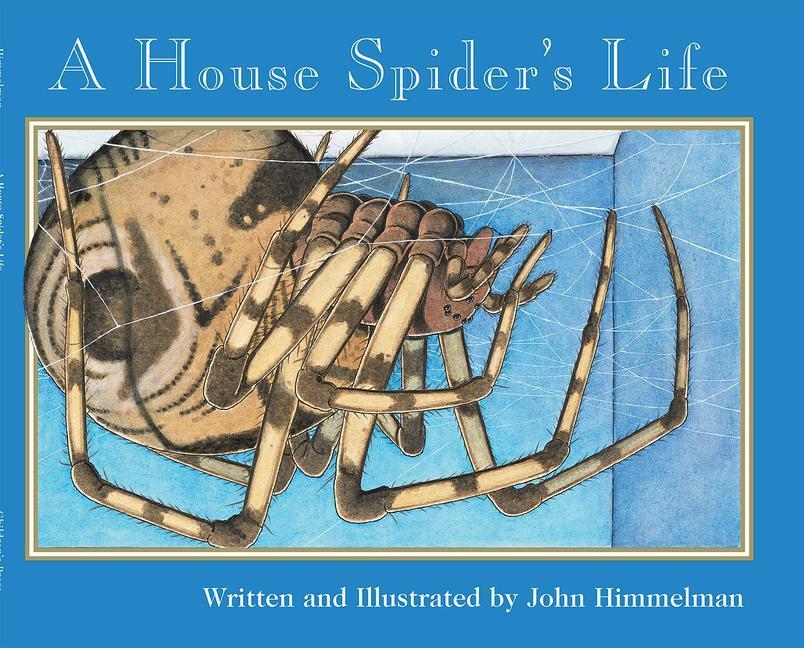 A House Spider's Life als Taschenbuch