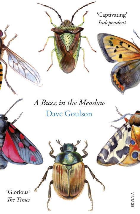 A Buzz in the Meadow als Taschenbuch von Dave G...