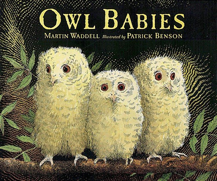 Owl Babies als Taschenbuch