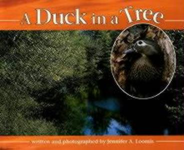 Duck in a Tree als Buch