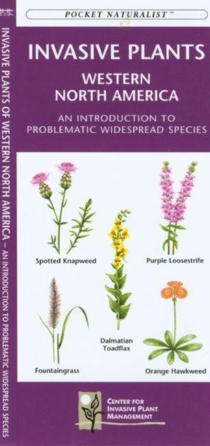 Southwestern Desert Plants: An Introduction to Familiar Species als Taschenbuch