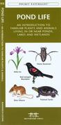Southern Appalachian Birds: An Introduction to Familliar Species