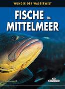 Fische im Mittelmeer