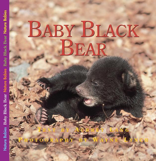 Baby Black Bear als Buch