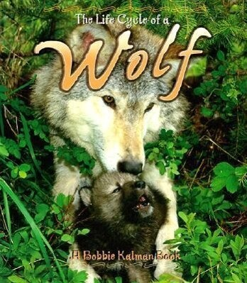 Wolf als Taschenbuch
