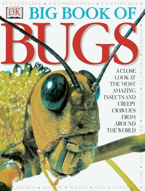 Big Book of Bugs als Buch
